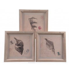 Firwood seashell pictures in an assortment of three