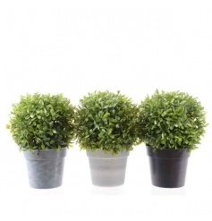 Stylish boxwood balls set in brown, grey and white pots.