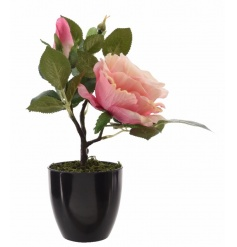 A pretty, fine quality artificial rose plant set within a black ceramic pot.