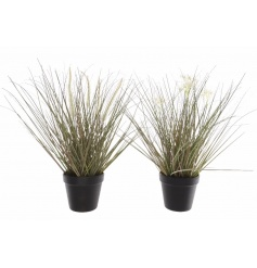 An assortment of 2 decorative grasses set within black pots. A stylish accessory for the home.