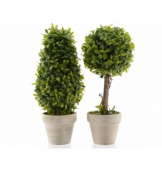 A mix of 2 fine quality boxwood trees in planters. A chic home accessory.