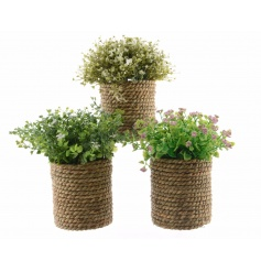 A mix of 3 rustic style artificial plants with pretty flowers. Complete with chunky rope planters.