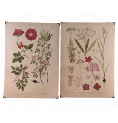 An assortment of 2 pretty botanical paintings on wood. A chic decoration for the home and potting shed.