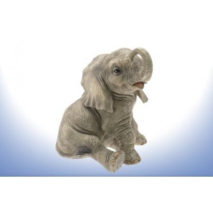 Sitting Baby Elephant