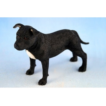 Staffordshire Bull Terrier Black and White